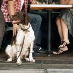 Top Dog-Friendly Restaurants In The City