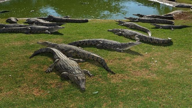 croc city