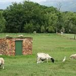 Van Gaalen Cheese Farm