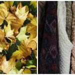 Top 10 Ways To Embrace Autumn In Joburg