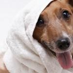 Top Mobile Pet Groomers