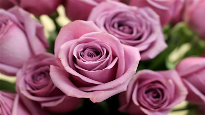 Top Florists In Johannesburg Flowers Joburg Co Za