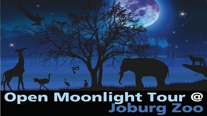 Open Moonlight Tour At Joburg Zoo