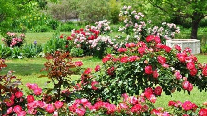 Charity Open Garden – Mulligatawny Farm