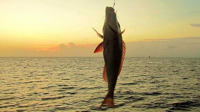 fishing-3-1600x765