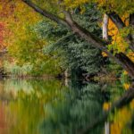Top Ways To Embrace Autumn In Joburg