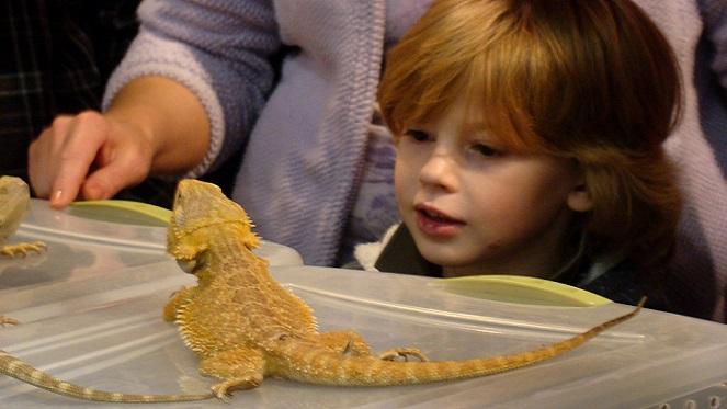 SOS² Reptile Expo