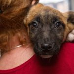 #SupportLocal: Joburg Animal Rescues In The City