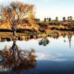 Explore Saddle Creek