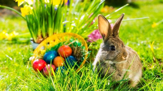 POSTPONED: The Sylvia's Easter Market And Easter Egg Hunt