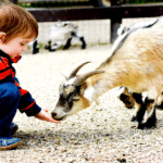 Spend A Day At Bokkie Park With The Kids