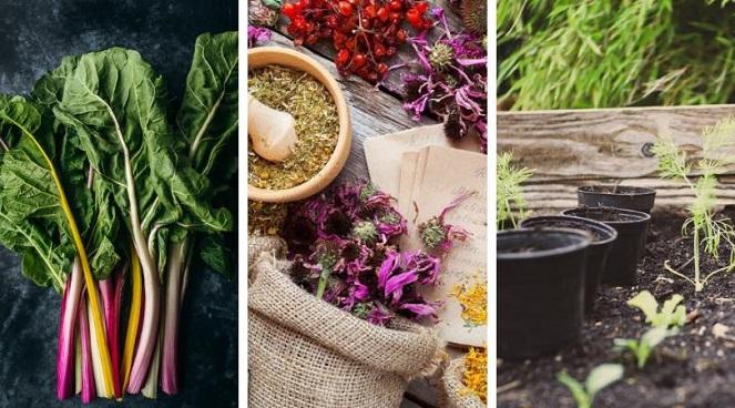 Winter Garden Harvest Swap 2019