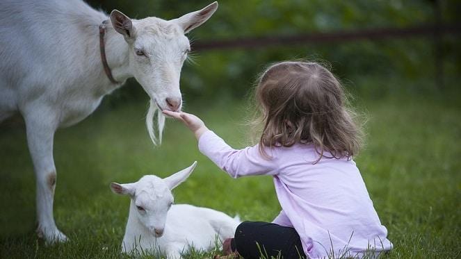 Hug A Goat