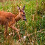 Nature Reserves In And Around Joburg