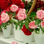 Annual Rose Show At Morningside Shopping Centre