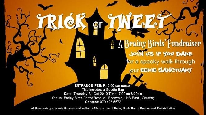 Trick or Tweet- Brainy Birds Halloween Fundraiser