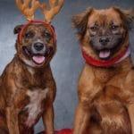 FURRstive Christmas Market