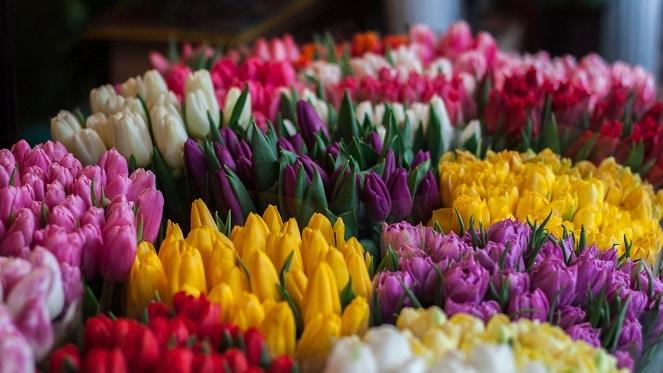 Multiflora Flower Market