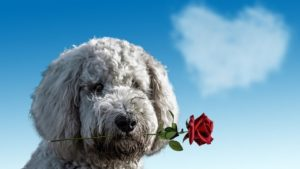 Date A Dog This Valentines Day