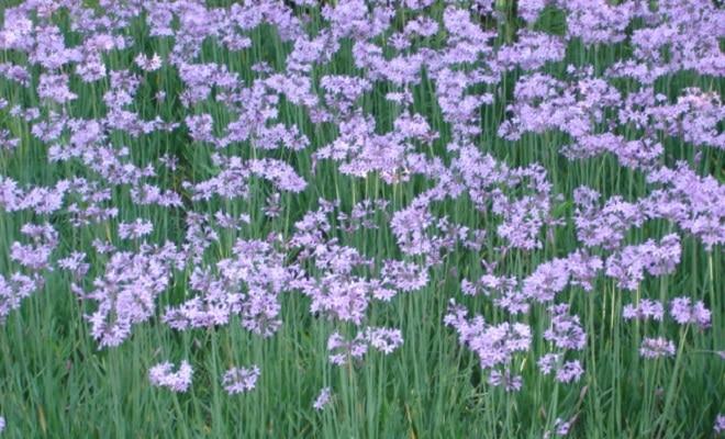 joburg garden