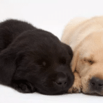 South African Guide-Dogs Association For The Blind