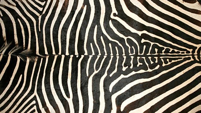 Soweto Game Skin