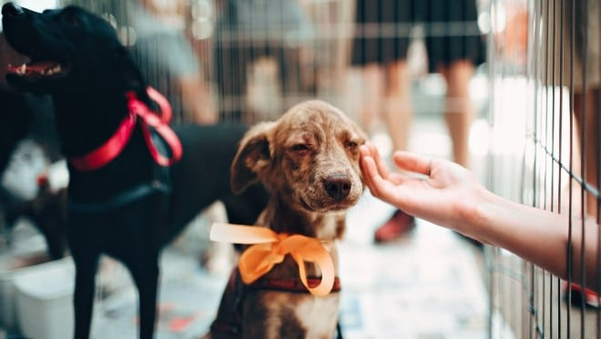 Help Animal Shelters Survive The Winter