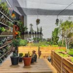 Urban Gardening Thrives At The JFF Rooftop Farm