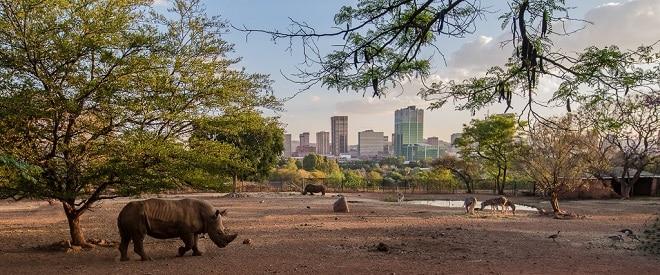 pretoria zoo